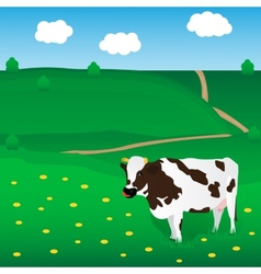 cow grazes on the meadow vector image