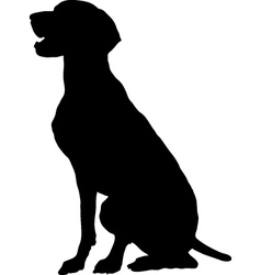 german pointer vector image vector image