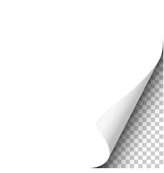 page curl on blank white sheet of paper vector image