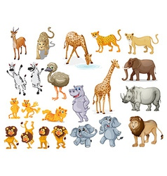 Wildlife set vector image