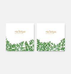 bundle elegant square backdrops or labels with vector image
