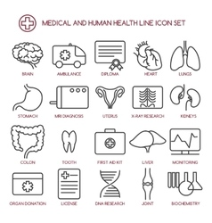 Medicine and human health line icons vector image vector image