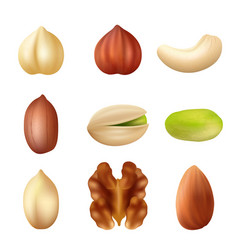 nuts collection nature food dried cashew healthy vector image