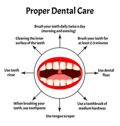 proper dental care international dentist day the vector image