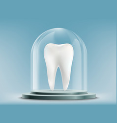white human tooth under the glass dome vector image
