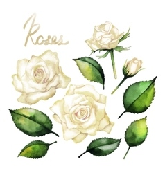 Watercolor roses collection vector image vector image