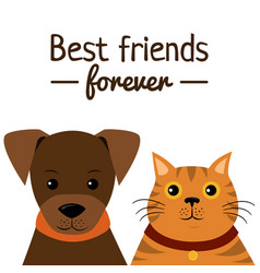Cat and dog characters best friend forever vector