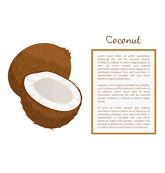 Coconut whole and cut exotic fruit poster vector