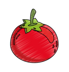 drawing tomato food nutrition vector image