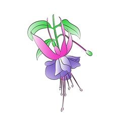 Fuchsia Plant vector