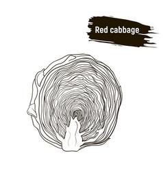 Outline vegetable red cabbage sketch vector