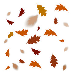 autumn leaves isolated on white background fallin vector image