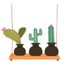 Cactus with potted on shelf isolated icon vector