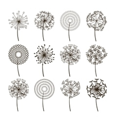 Dandelion flower icons Dandelions fluffy seeds vector