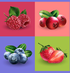 raspberries cranberries blueberries and vector image