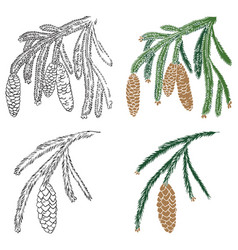 Spruce branch and pine cone vector