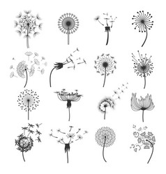 dandelion blowball in the wind set vector image vector image
