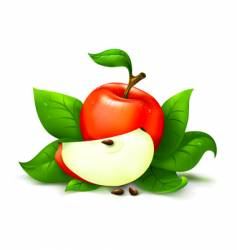 apple with leafs vector image vector image