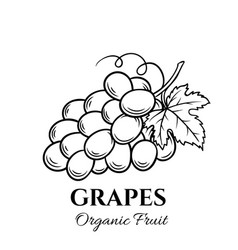 Hand drawn grapes icon vector