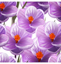 Seamless pattern crocus flowers EPS10 vector image