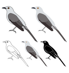 Sabia da praia bird in profile view vector