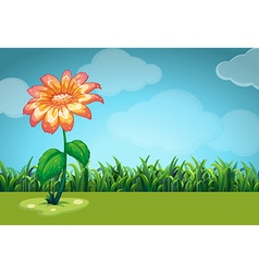 Scene with orange flower in the field vector
