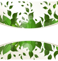 Abstract background with green leaves for design vector image