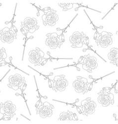 Carnation flower outline background vector