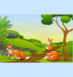 cartoon three a fox enjoying on the field vector image