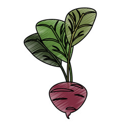 drawing beetroot food nutrition vector image