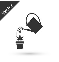 grey watering can sprays water drops above vector image