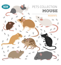 Mice breeds icon set flat style isolated on white vector