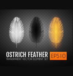 realistic feathers set elegant isolated ostrich vector image