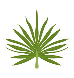 branche and leaves of tropical plants fronds vector image