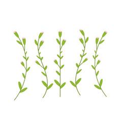 botanical floral set green plants branches vector image