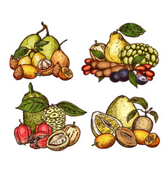 Exotic tropical fruits harvest vector