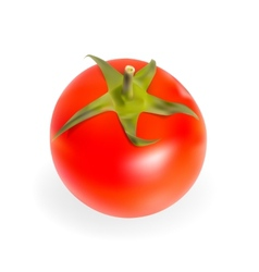 Fresh Tomatoes Isolated on White Background vector