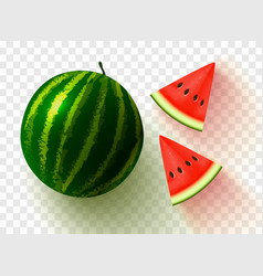realistic watermelon on transparent background vector image