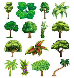 Set variety plants and trees vector