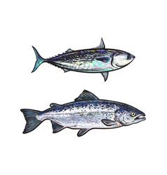 Sketch cartoon sea fish salmon tuna set vector