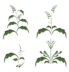 silhouettes of plants vector image