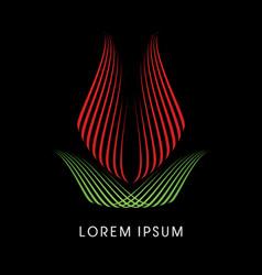 tulip lotus flower vector image