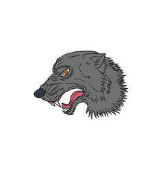 grey wolf head growling drawing vector image vector image