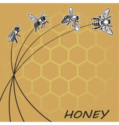 bee and honey background vector image