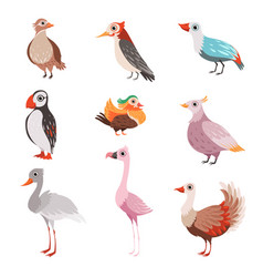 collection beautiful birds flamingo puffin vector image