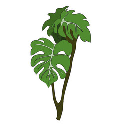 house plant on a branch vector image