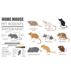 mice breeds icon set flat style isolated on white vector image