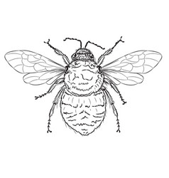Bumble bee line art vector