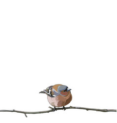 card with bullfinch on a branch vector image