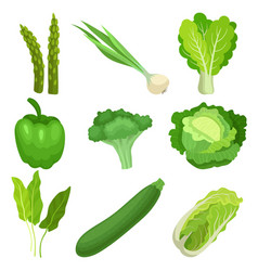 Flat set of fresh green garden vegetables vector